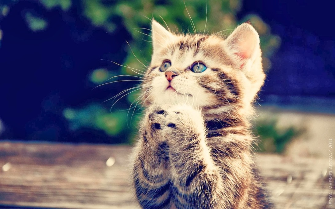 sweet-cat-prayering-image